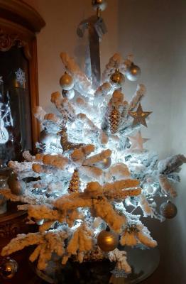Sapin blanc, Noël 2015